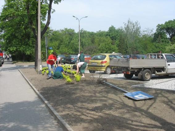 Bezrobotni sadzą zieleń na terenie Starostwa Powiatowego w Kędzierzynie-Koźlu